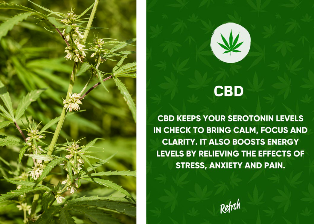 Hemp Plant and Benefits of CBD