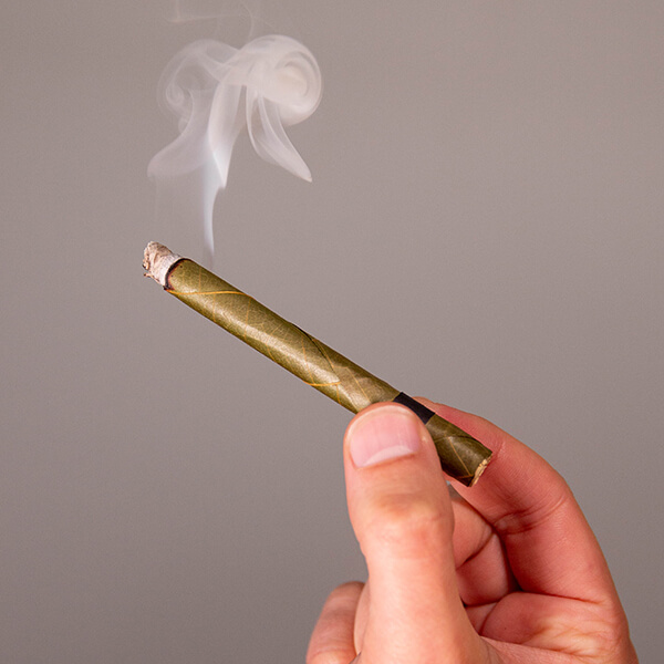 a hand holding a cordia palm-leaf blunt wrap that is lit with white smoke billowing at the tip